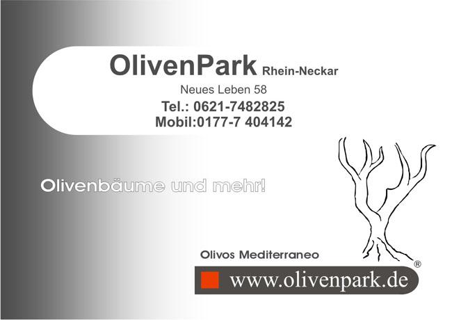 olivenbaum olivenb ume verkauf kaufen vermietung schneiden berwintern rhein neckar. Black Bedroom Furniture Sets. Home Design Ideas